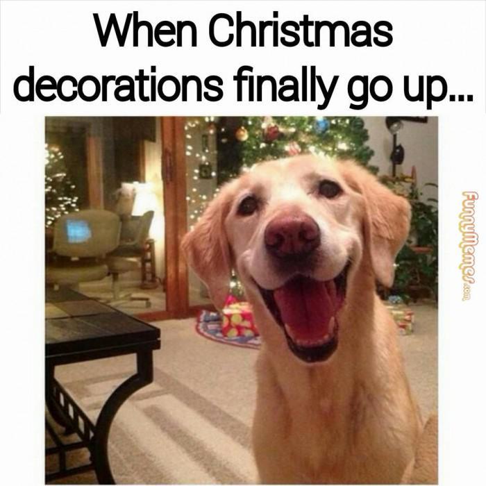 6bc5d3a26c2bff153ff5f1d0c30399d2 christmas decorations in november meme psoriasisguru com